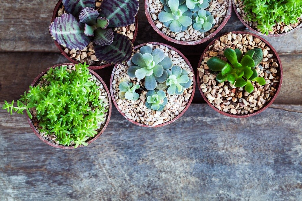 different potted succulents